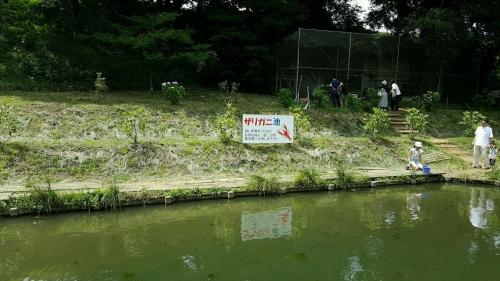くりもとザリガニ池