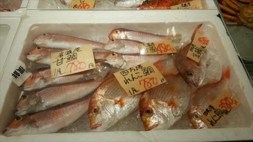 撰鮮_お魚3