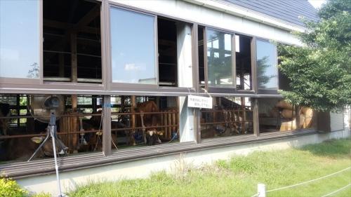 飯田牧場牛舎