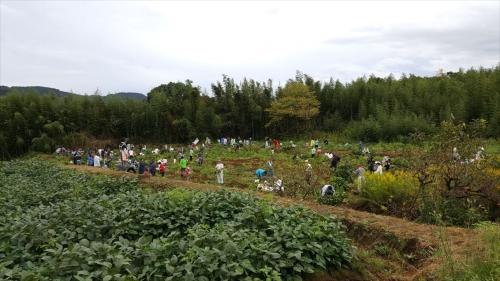枝豆収穫祭_畑