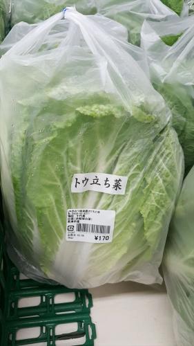 味楽囲_トウタチ菜