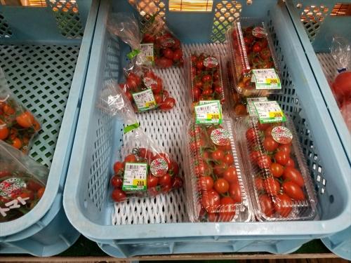 うまくた_いんどうさんトマト1