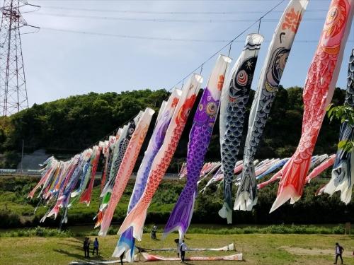中川橋こいのぼり1