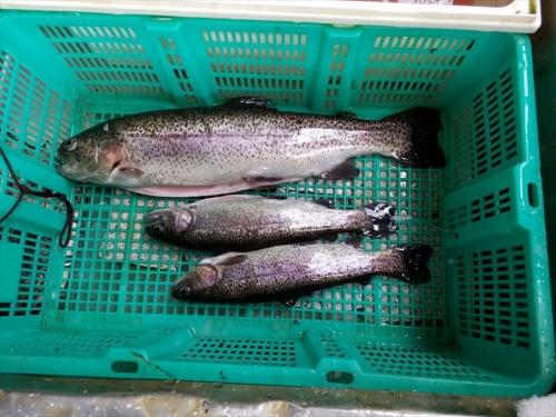 マス釣りサイズ比較