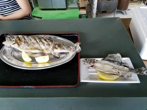 マス焼き魚大きさ比較