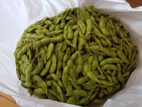 枝豆収穫祭2017_収穫した枝豆3