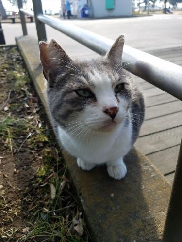 袖ケ浦公園_猫1
