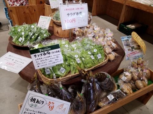 愛彩流_サラダ春菊