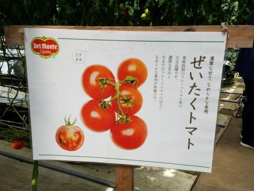 カズサとまとガーデン_せいたくトマト