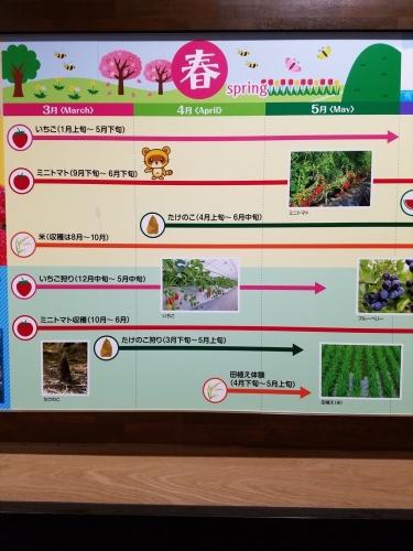食彩カレンダー海_春