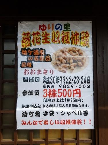 ゆりの里_落花生収穫ポスター