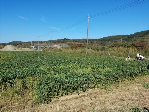枝豆収穫祭2018_畑
