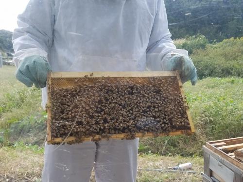 はちみつ工房_板についたミツバチ